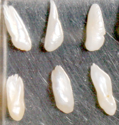 Natural American &ldquo Angel Wing&rdquo  pearls
