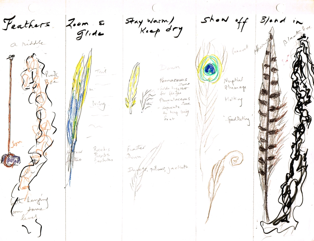 eve sketch feathers